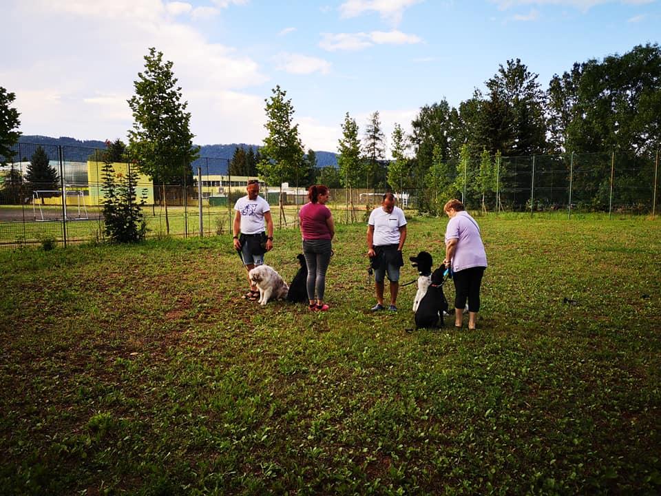 Tréning psov Žilina