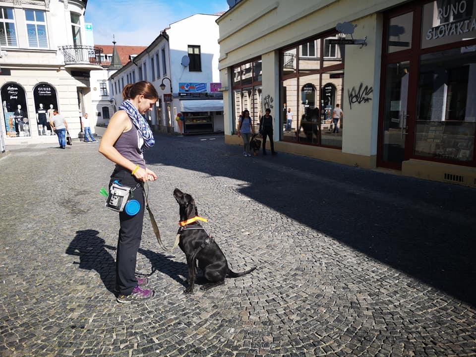 Výcvik psov v Žiline