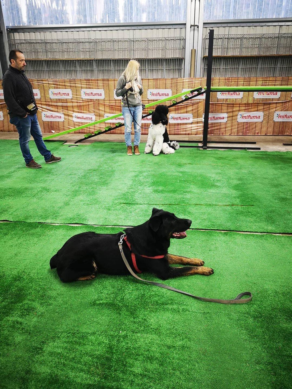 Tréning psov v Žiline