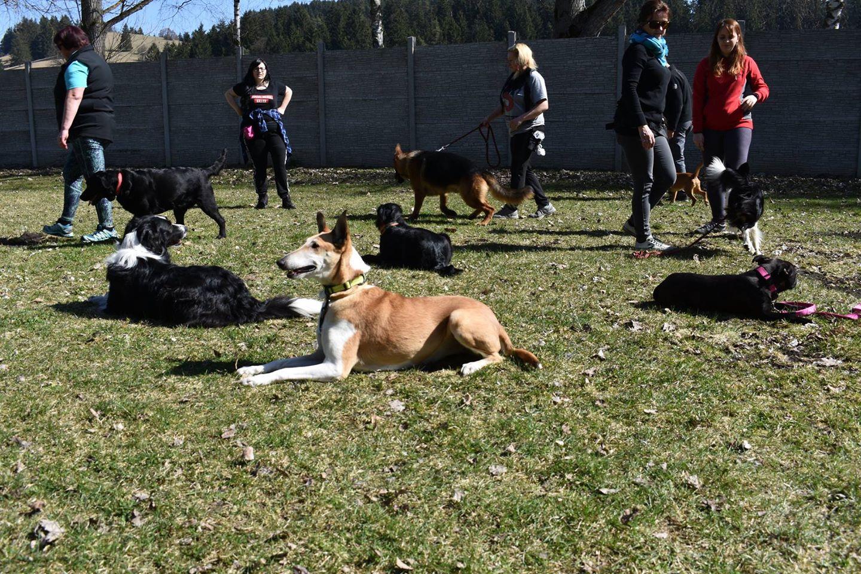 Cvičenie psa v prítomnosti iných psov