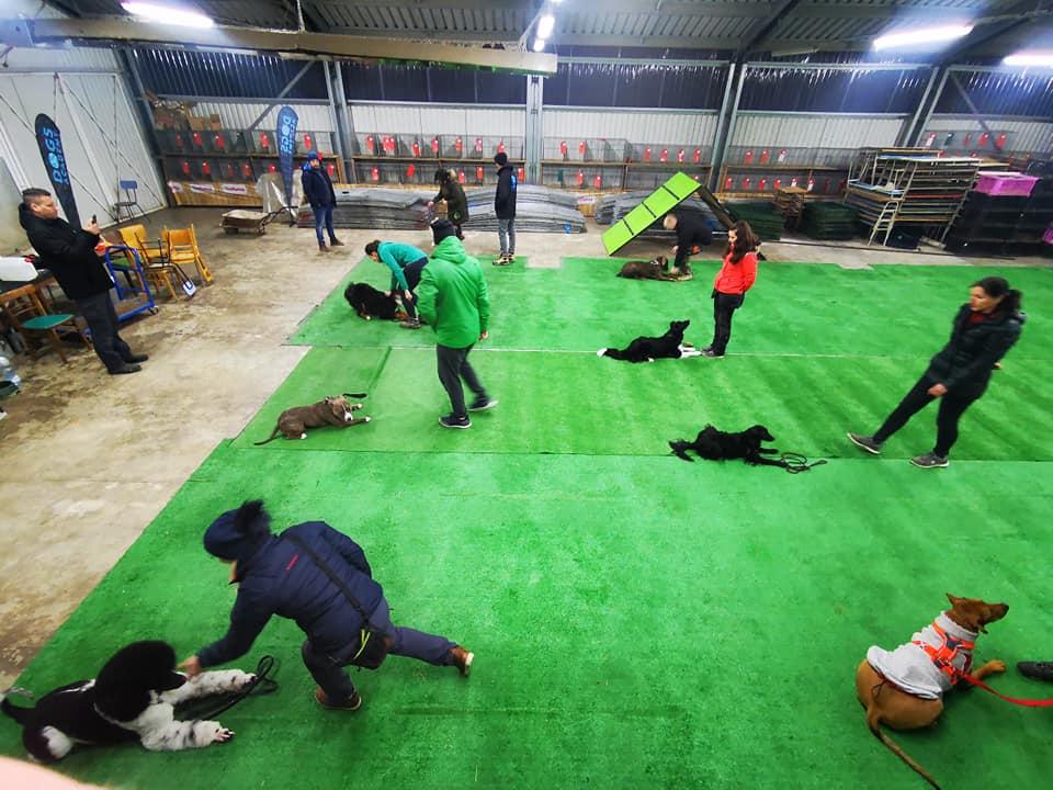Skupinové cvičenie psov v Žiline