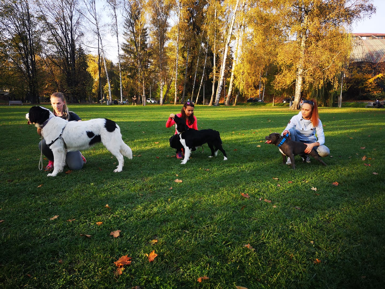 Výcvik šteniatok v Žiline