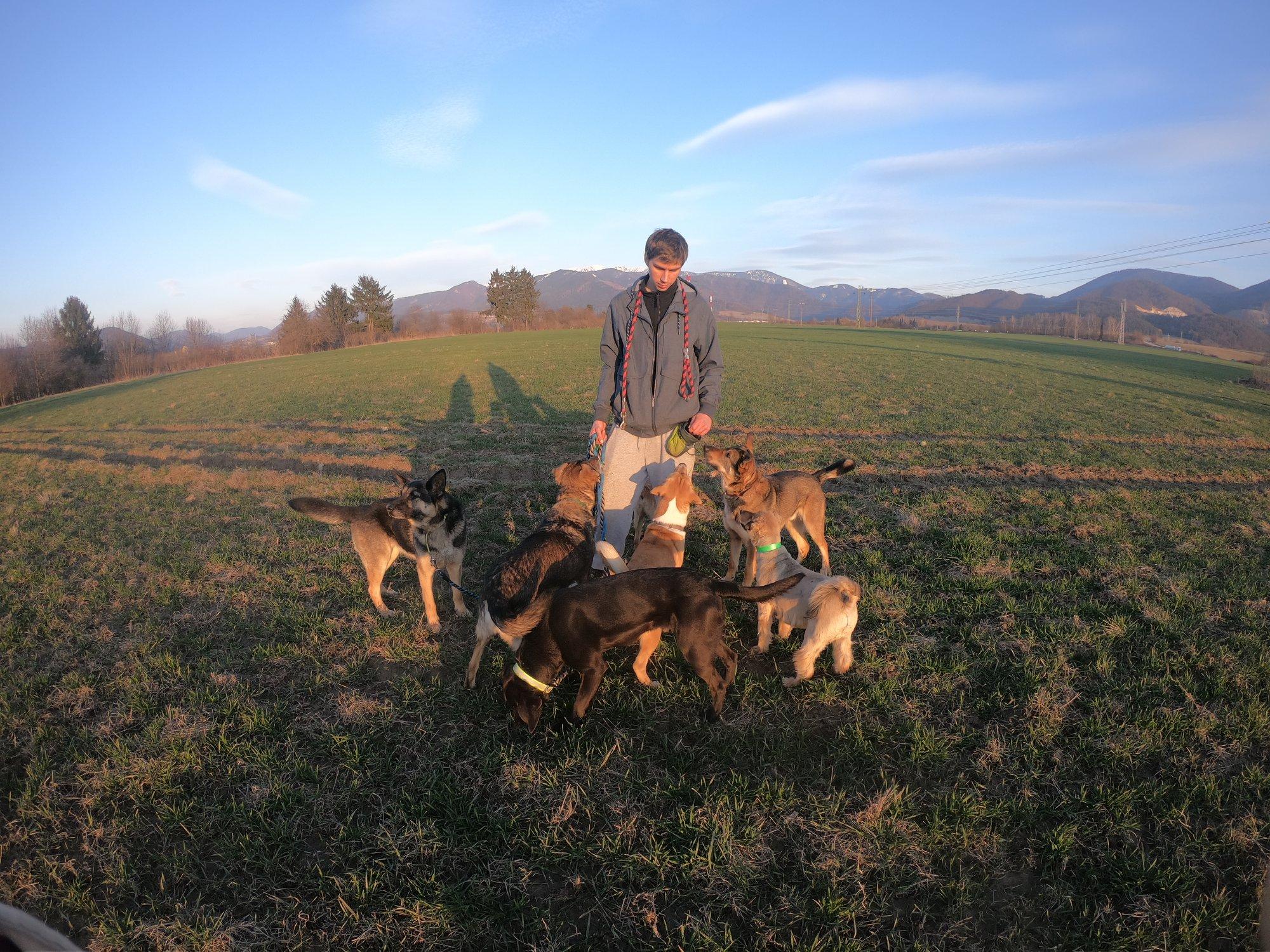 Vencenie psov v Žiline