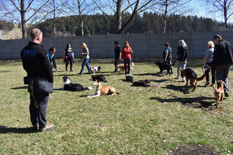 Skupinové cvičenie psov