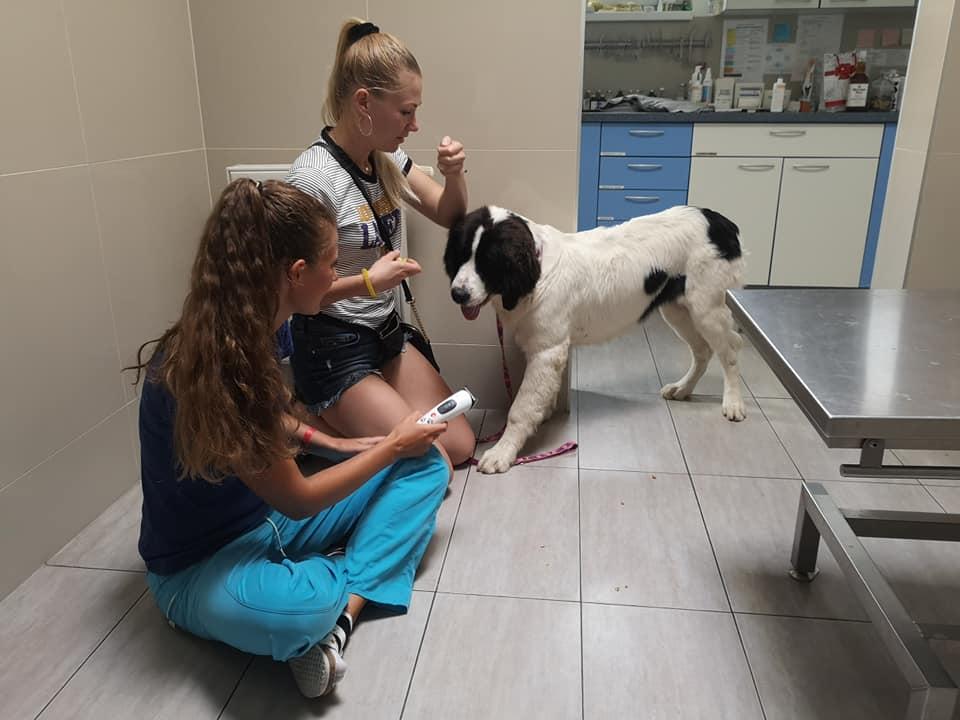 Ošetrenie psa