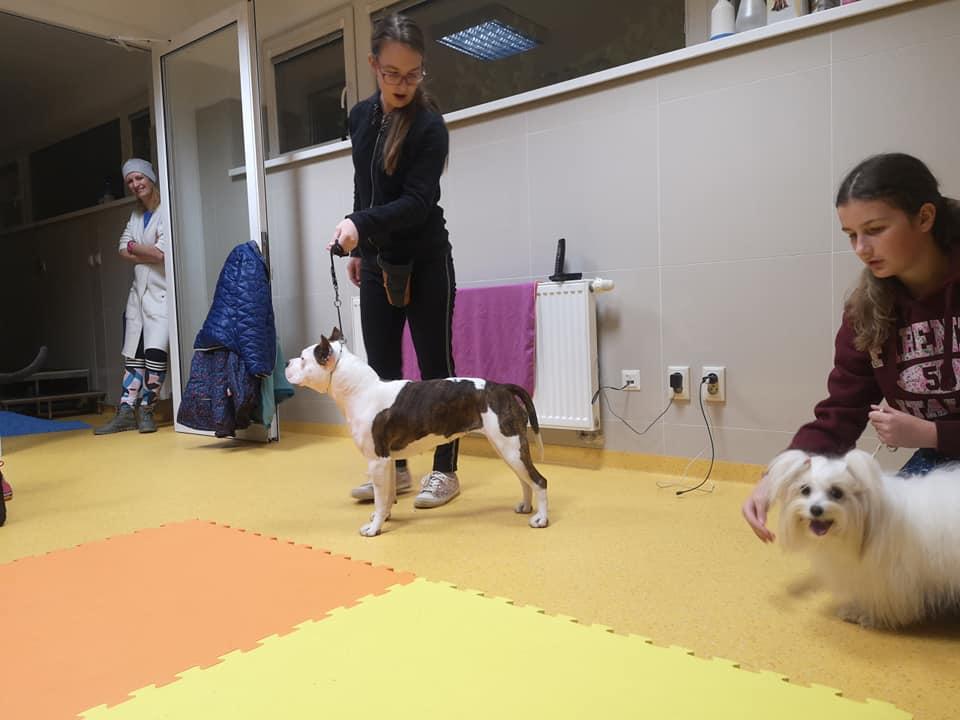 Výstava psov Žilina