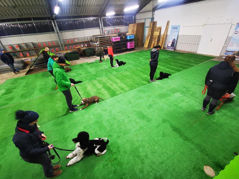 Skupinový výcvik psa